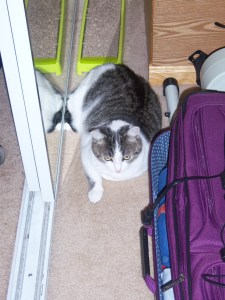 Chip attempts to be packed in the suitcase