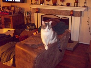Chip guards the laundry chair & its contents