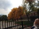 Random fall trees in a military base.