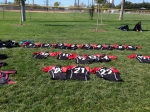Jerseys in the grass - I've missed this scene!